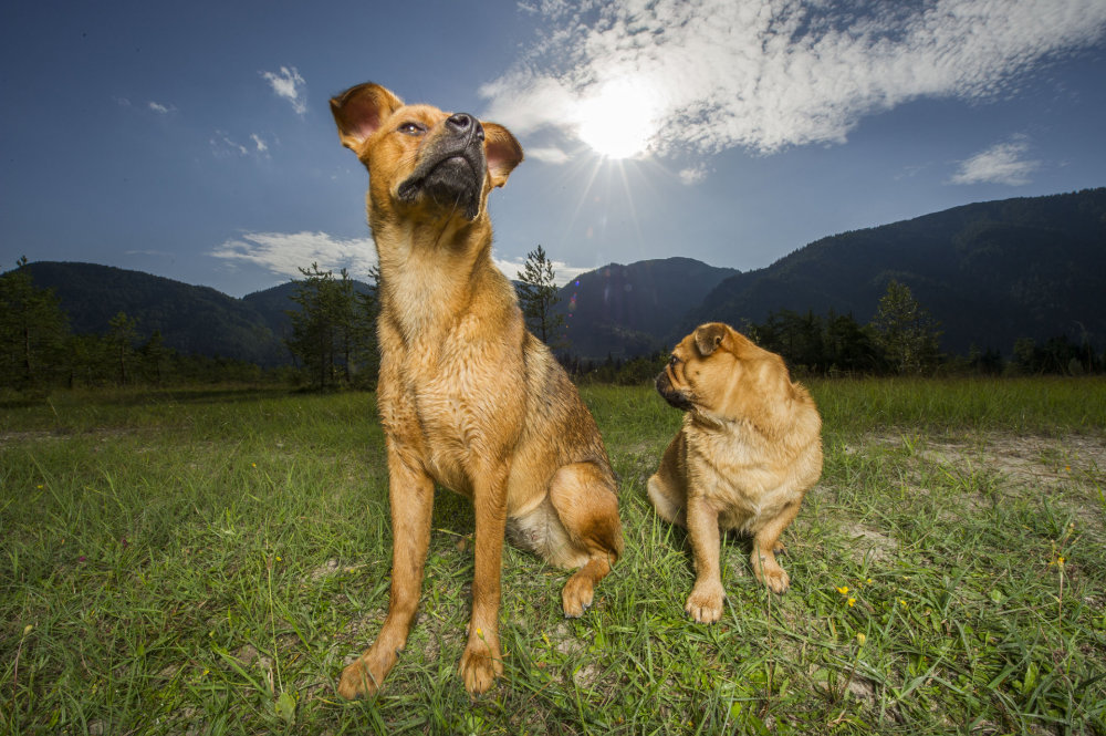 kikis dog care hundebetreuung fieberbrunn social walks00005