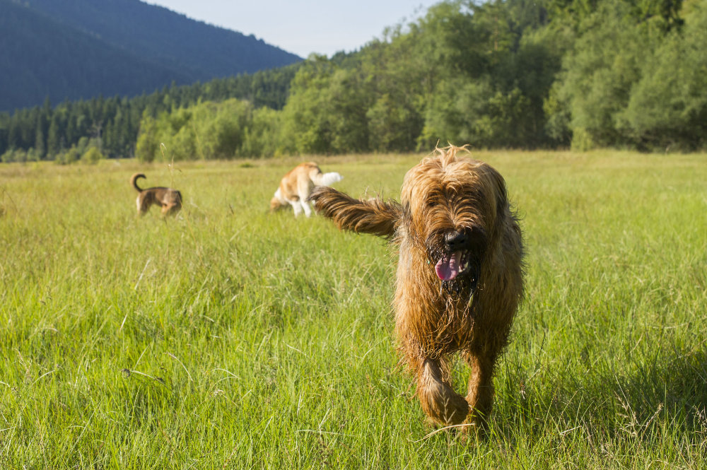 kikis dog care hundebetreuung fieberbrunn social walks00012