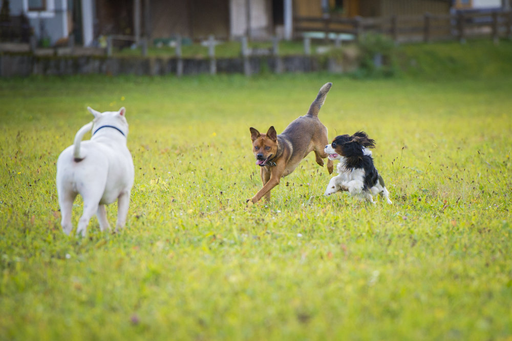 kikis dog care hundebetreuung fieberbrunn social walks00034