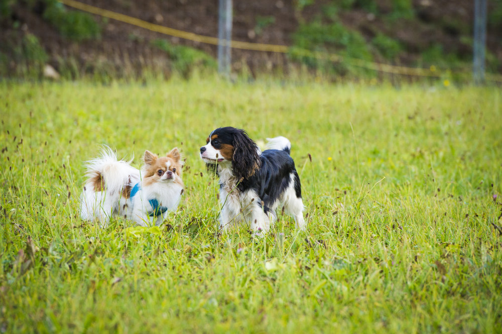 kikis dog care hundebetreuung fieberbrunn social walks00036