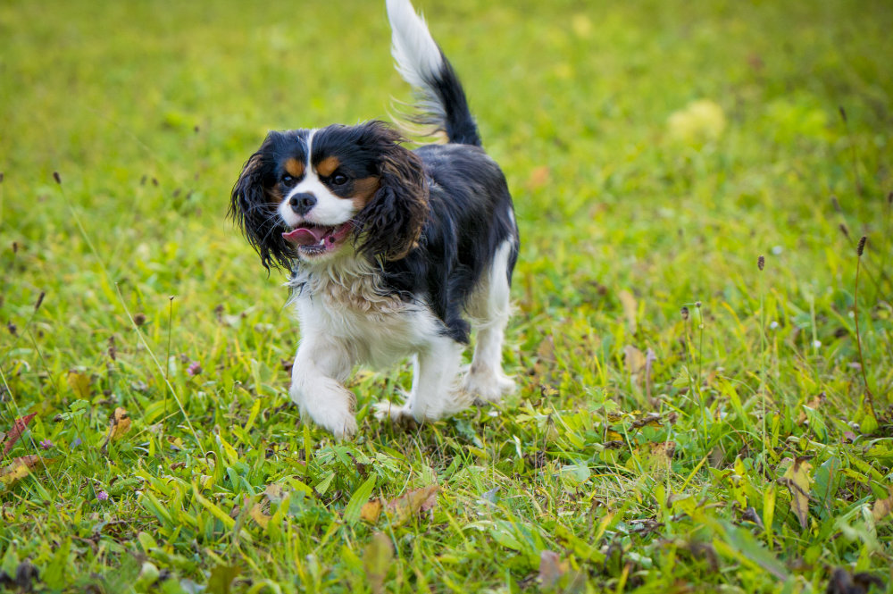 kikis dog care hundebetreuung fieberbrunn social walks00038
