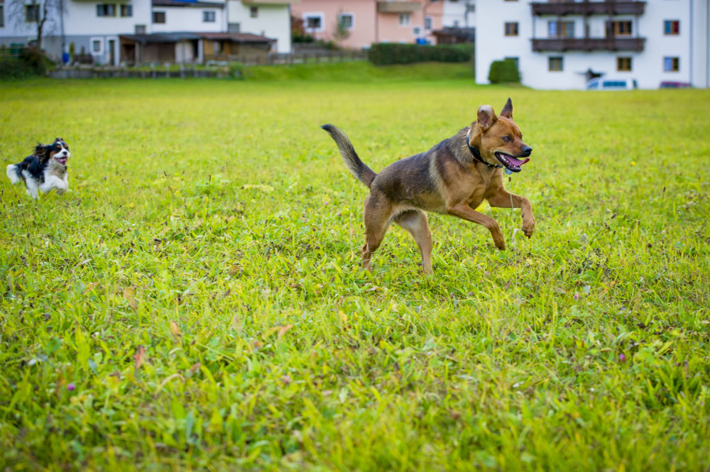 kikis dog care hundebetreuung fieberbrunn social walks00039