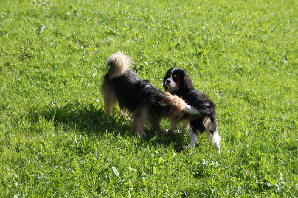 kikis dog care hundebetreuung fieberbrunn social walks00040