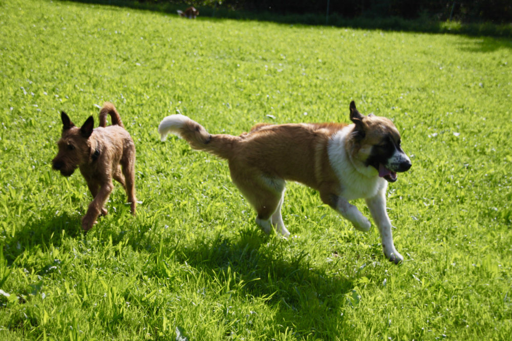 kikis dog care hundebetreuung fieberbrunn social walks00041