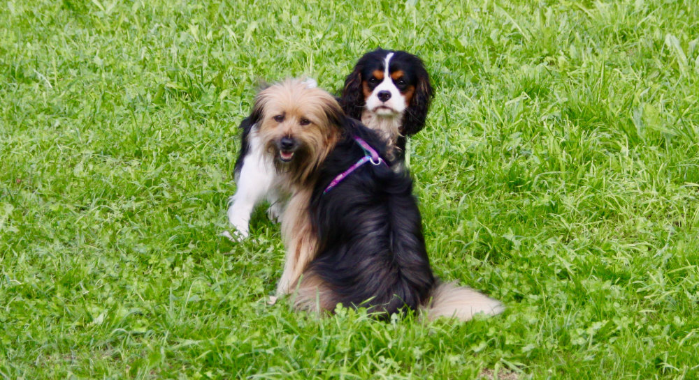 kikis dog care hundebetreuung fieberbrunn social walks00042