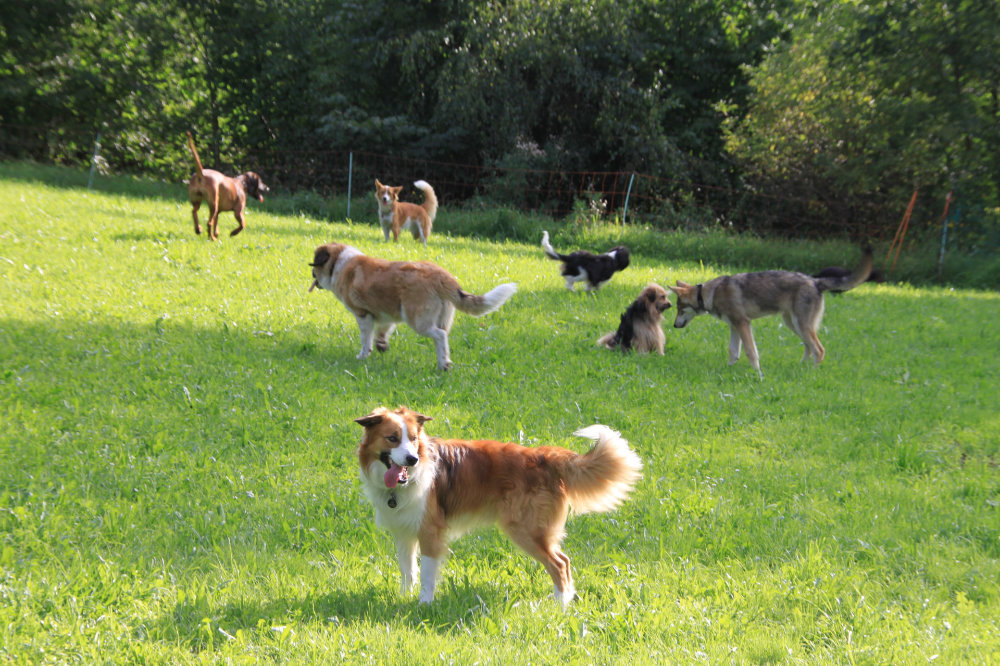 kikis dog care hundebetreuung fieberbrunn social walks00043